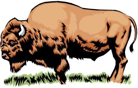 bison - bisonte