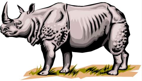 rhyno - rinoceronte