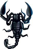 scorpio - scorpione